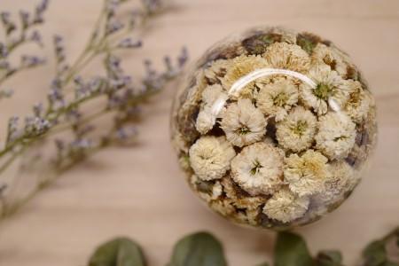 台灣白菊花