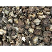 埔里冬菇(一期)(小)紐扣菇